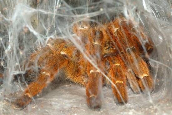 Животные с восемью конечностями плетут паутину