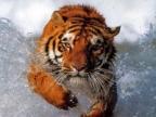 SharXan аватар